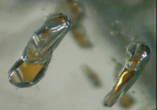 Diamanti con inclusioni di granato possono formarsi in profondità fino a 550 chilometri sotto la crosta terrestre (crediti: Jeff W.Harris, Università di Glasgo