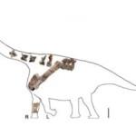 Scoperto in Cina un nuovo dinosauro