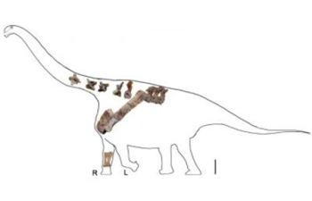 dinosauro cina