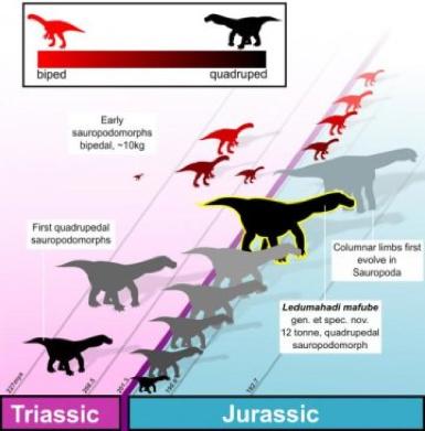 Ledumahadi mafube è il primo sauropodomorfo del Giurassico (crediti: Wits University)