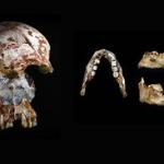Fossili umani in Asia sud-orientale rivelano la primitiva diversità umana