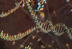 Spliceosoma, un grande sarto coordina il 'taglia e cuci' dell'informazione genetica