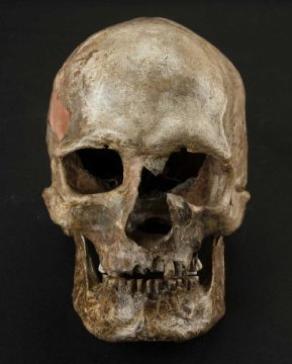 dointe-vestonice-cranio