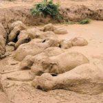Salvataggio di 11 elefanti intrappolati nel fango in Cambogia
