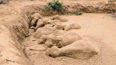 elefanti-fango