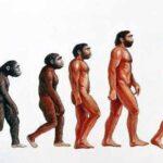 Scoperto il punto di divergenza delle linee evolutive tra esseri umani e scimmie