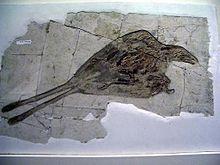 evoluzione-uccelli