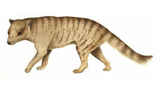 Carnivoro marsupiale estinto