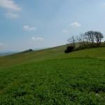 Toscana e aree vaste: manca il bandolo della matassa