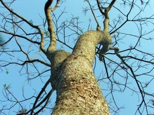 Green psychology: Ambiente e Riabilitazione Psicosensoriale