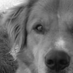 Animali domestici e scelte difficili: cosa fare quando si ammalano gravemente?