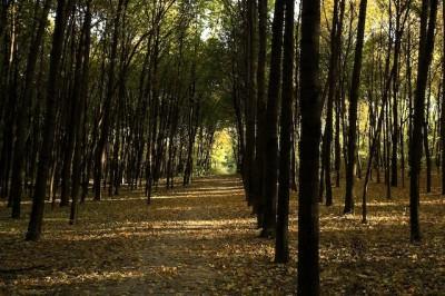 taglio per biomassa