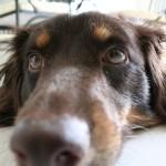 Veterinari contro Luciano Onder: non è vero che cani e gatti nuocciono durante la gravidanza