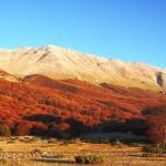 Abruzzo: nuova legge forestale apre al restauro dei boschi