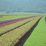 Cambiamenti climatici minacceranno i raccolti in Europa dal 2030