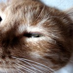 Colonie feline a rischio proprio per Natale