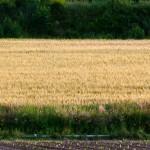 I terreni agricoli esistenti potrebbero sfamare più di  4 miliardi di persone