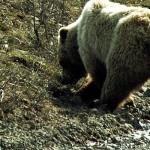 Specie alloctone, cambiamenti climatici, caccia <br> Intervista a Adriano Martinoli