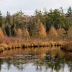 FAO sulle foreste: sotto pressione, andrebbero studiate e tutelate