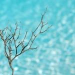 Organizzazione Meteorologica Mondiale: <br> nuovo record di gas serra <br> Pianeta a rischio catastrofe