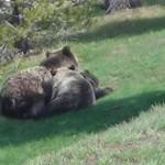 Per la seconda volta Patagonia finanzia Salviamo l'Orso con 8000 dollari