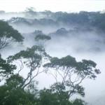 """Dove """"vanno"""" le foreste boreali con i cambiamenti climatici?"""