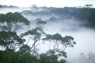 Foresta amazzonica     Foto: William Laurance