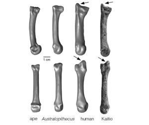 fossil human hand