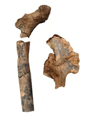 fossili-umani