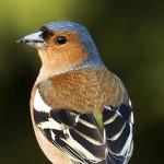 Drammatici effetti dell'inquinamento dell'aria sulle popolazioni di uccelli