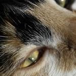 BBC spia la vita segreta dei gatti