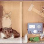 Il gatto è felice e triste? Passi avanti nel controllo di qualità quantistico