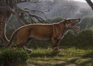 Trovati in un museo del Kenia resti fossili di un gigantesco carnivoro