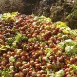 Spreco alimentare: 1,3 miliardi di tonnellate di cibo perse ogni anno<br> Potrebbero sfamare 2 miliardi di persone