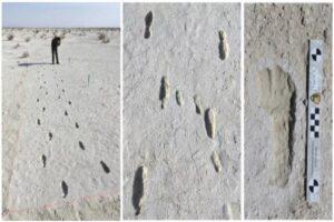 Impronte fossili testimoniano il viaggio di una famiglia preistorica
