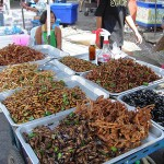 Crisi alimentare: per la Fao la soluzione sono gli insetti