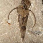 Finalmente classificate le misteriose antiche creature marine a forma di cono
