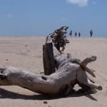 I dimenticati dei campi di Tindouf, del Sahara Occidentale