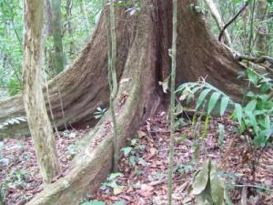 Lettiera di una foresta tropicale. Crediti: Dr. Emma Sayer