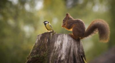 mammiferi-uccelli