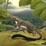 Biodiversità dei mammiferi placentati è esplosa dopo l'età dei dinosauri
