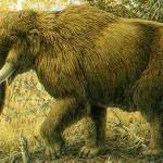 Estinzioni della megafauna: responsabilità umane, non climatiche
