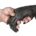 Fossili di Australopithecus trovati ad est della Great Rift Valley, in Kenia