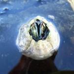 Ecco come si muovono le creature marine a causa dei cambiamenti climatici