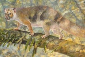 Leone marsupiale estinto della grandezza di uno scoiattolo scoperto in Australia