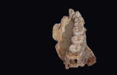 Parte sinistra della mascella rinvenuta sul Monte Carmelo (Israele)(crediti: Rolf Quam)