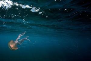 Specie marine 'aliene' favorite dall'aumento dei livelli di CO2