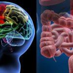 Cervello e intestino forse non sono organi così lontani