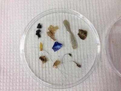 micro-plastica