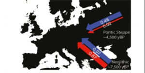 Più uomini che donne dall'Asia verso l'Europa, 5000 anni fa